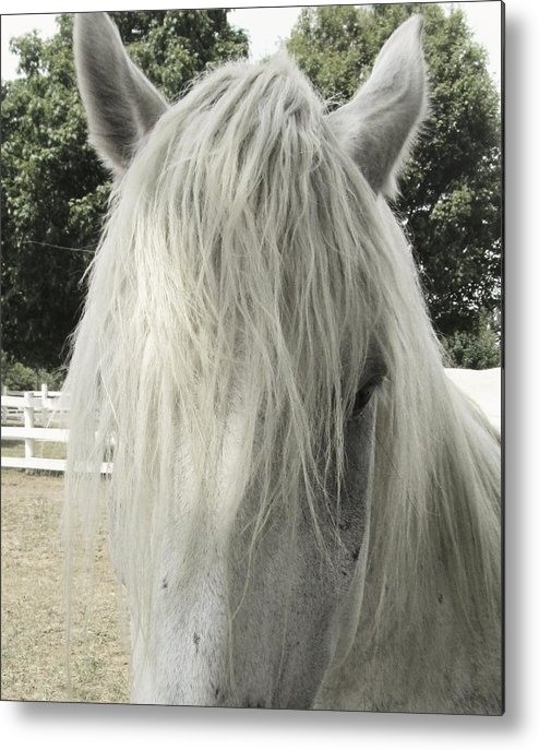 Horse Metal Print featuring the photograph Mop Top by Todd Sherlock