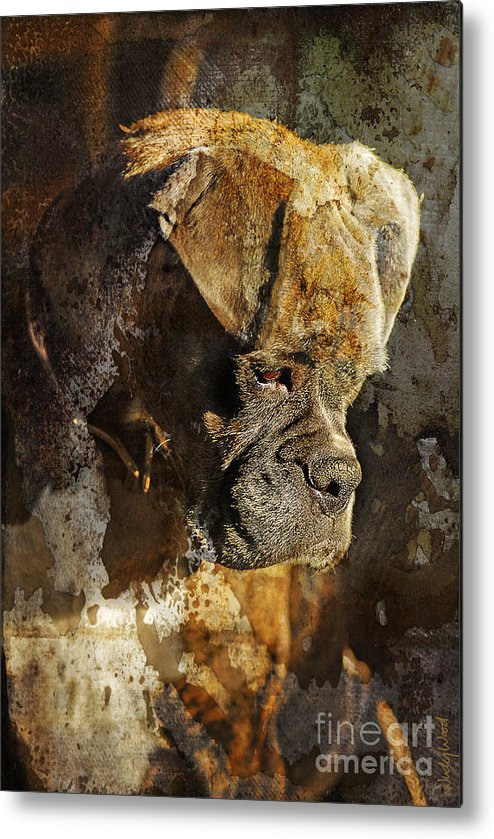 Dog Metal Print featuring the digital art Thought Process by Judy Wood