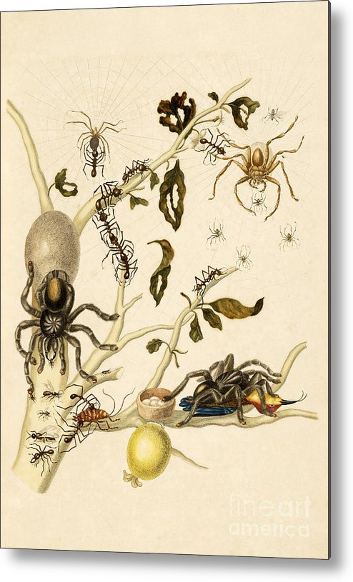 Branch Metal Print featuring the photograph Ants Spiders Tarantula And Hummingbird by Getty Research Institute