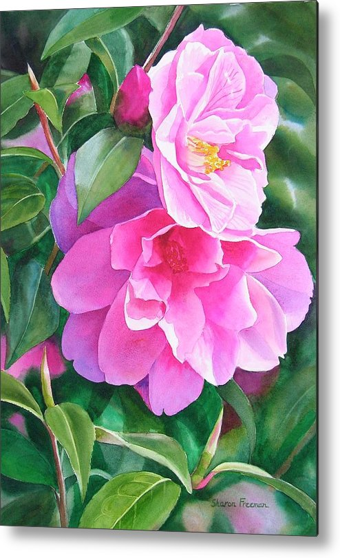 Pink Flower Metal Print featuring the painting Deep Pink Camellias by Sharon Freeman