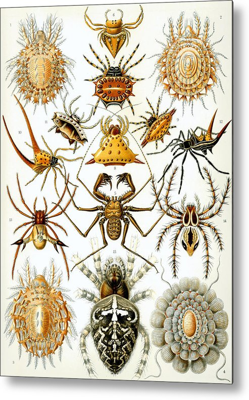 Arachnida Metal Print featuring the digital art Arachnida by Georgia Fowler