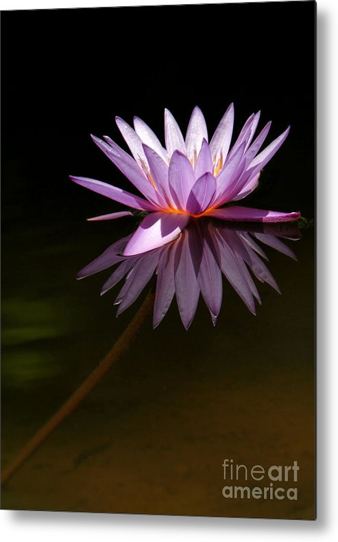 Macro Metal Print featuring the photograph Lavendar Reflections by Sabrina L Ryan