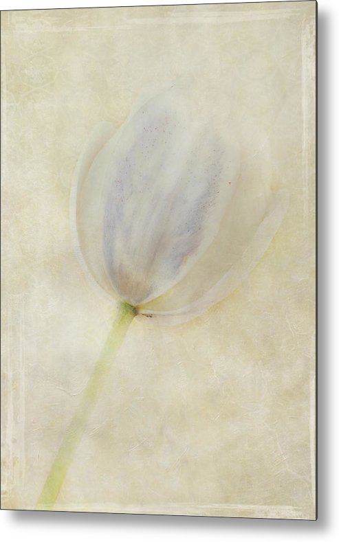 Flora Metal Print featuring the photograph Tulip 1 by Marion Galt