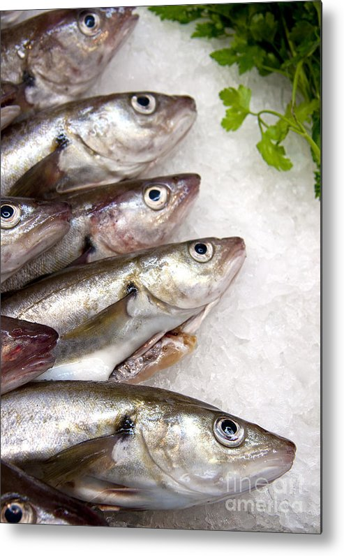 Animal Metal Print featuring the photograph Fish On Ice by Jane Rix