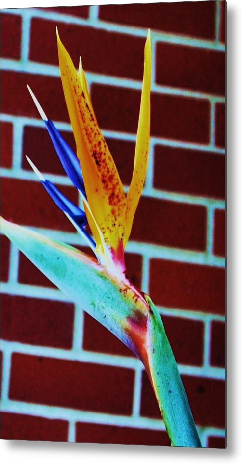 Beautiful Flower Metal Print featuring the photograph Bird Of Paradise by Todd Sherlock