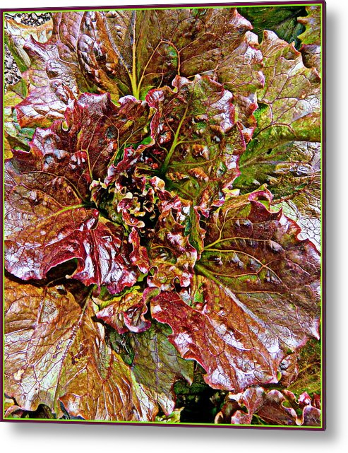 Vegetable Metal Print featuring the painting Lettuce by Mindy Newman
