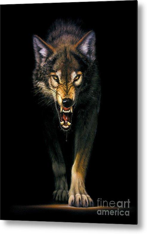 Animal Metal Print featuring the photograph Stalking Wolf by MGL Studio - Chris Hiett