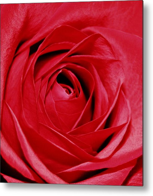 Flowers Metal Print featuring the photograph Silky Petals by Cathie Tyler