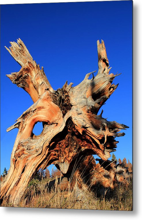 Tree Roots Metal Print featuring the photograph Fallen by Shane Bechler