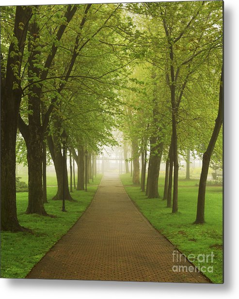 Fog Metal Print featuring the photograph Foggy Park by Elena Elisseeva