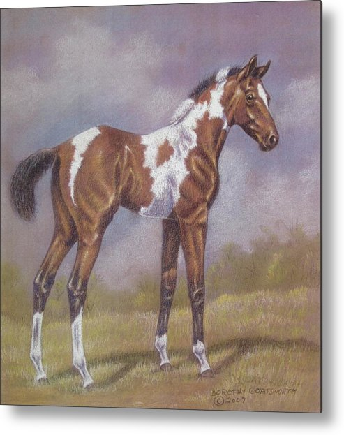 Foa; Paint Horse Metal Print featuring the pastel Bay Paint Foal by Dorothy Coatsworth