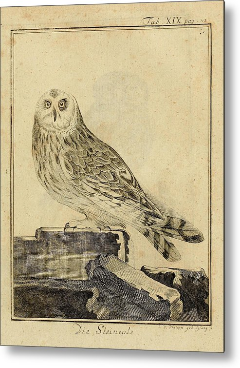 Stein Metal Print featuring the drawing Die Stein Eule Or Church Owl by Philip Ralley