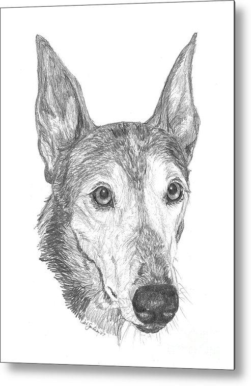 Greyhound Metal Print featuring the drawing Greyhound by Deb Gardner