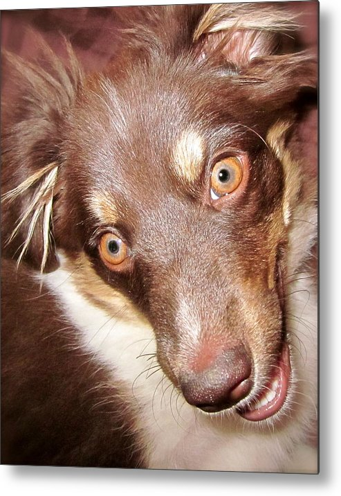 Talking Dog Metal Print featuring the photograph Talking Dog by Gwyn Newcombe