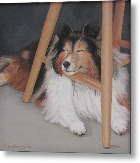 Shetland Sheepdog Metal Print featuring the painting Teddy In My Studio by Sandra Chase