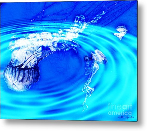 Jellyfish Pool Metal Print featuring the photograph Jellyfish Pool by Methune Hively