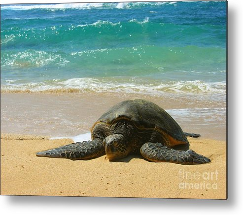 Sealife Metal Print featuring the photograph Just Resting by Christine Stack