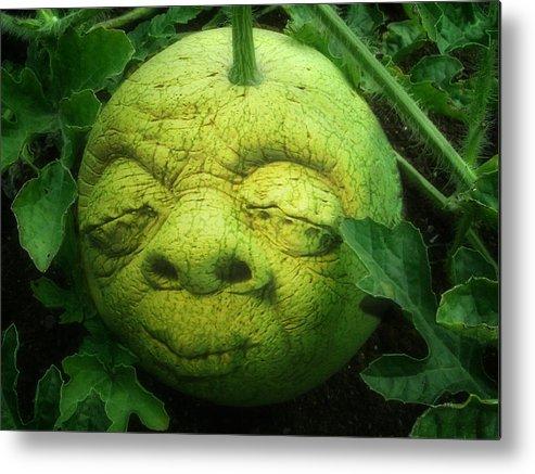 Melon Metal Print featuring the photograph Melon Head by Jack Zulli