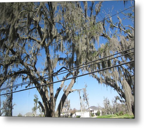 New Metal Print featuring the photograph New Orleans - Swamp Boat Ride - 12122 by DC Photographer