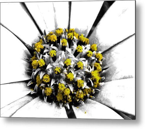 Selective Metal Print featuring the photograph Pollen by Steve Taylor