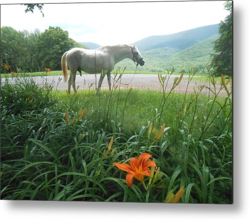 Summer Metal Print featuring the photograph Summer Day Memories With The Paso Fino Stallion by Patricia Keller