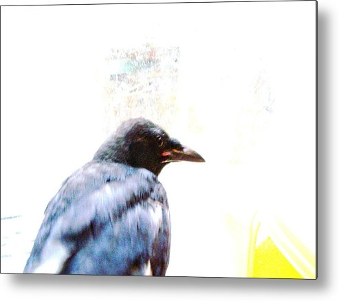 Crow Metal Print featuring the photograph Crow Portrait by YoMamaBird Rhonda