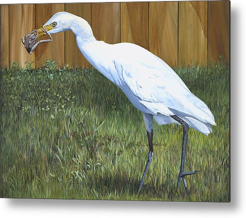 Cattle Egret Metal Print featuring the painting Eye To Eye by AnnaJo Vahle