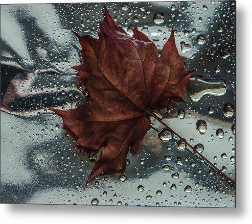 Still Life Metal Print featuring the photograph Fallen Leaf by Vladimir Kholostykh