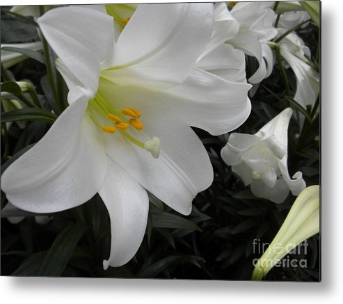Flower Metal Print featuring the photograph Lilies by Silvie Kendall
