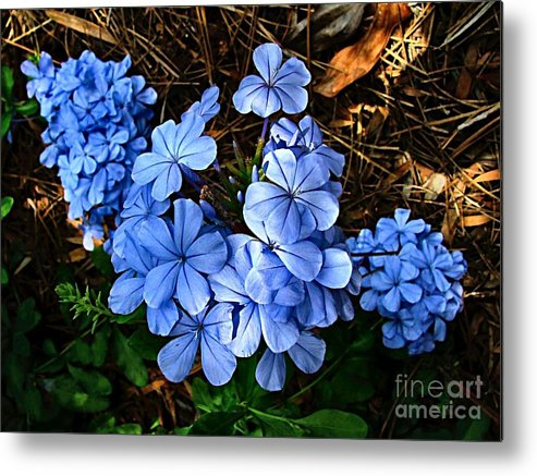Blue Flowers Metal Print featuring the photograph On The Forest Floor by Julie Dant