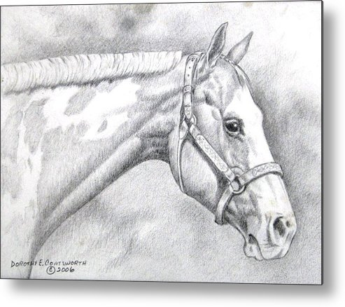 Metal Print featuring the drawing Paint Horse by Dorothy Coatsworth
