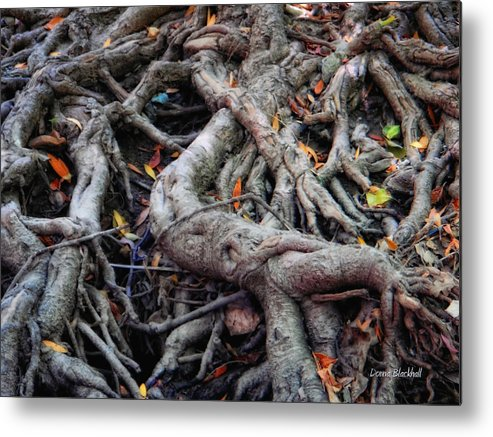 Roots Metal Print featuring the photograph Entanglement by Donna Blackhall
