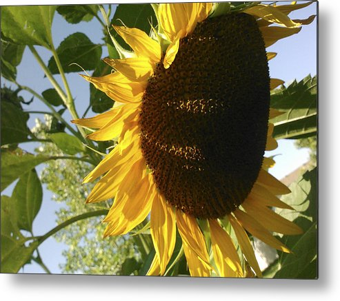 Sunflower Metal Print featuring the photograph Life Is Good by Jane Autry