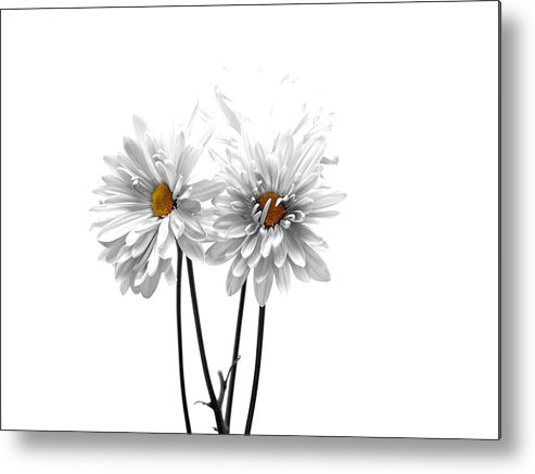 White Metal Print featuring the photograph White On White by Regina Arnold