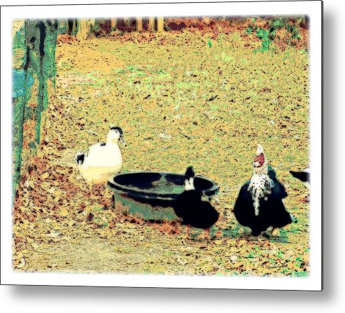 Ducks Metal Print featuring the mixed media Ducky Afternoon by YoMamaBird Rhonda