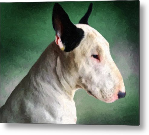 English Bull Terrier Metal Print featuring the painting Bull Terrier On Green by Michael Tompsett