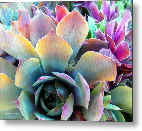 Hens And Chicks Photography Metal Print featuring the painting Hens And Chicks Series - Unfolding by Moon Stumpp