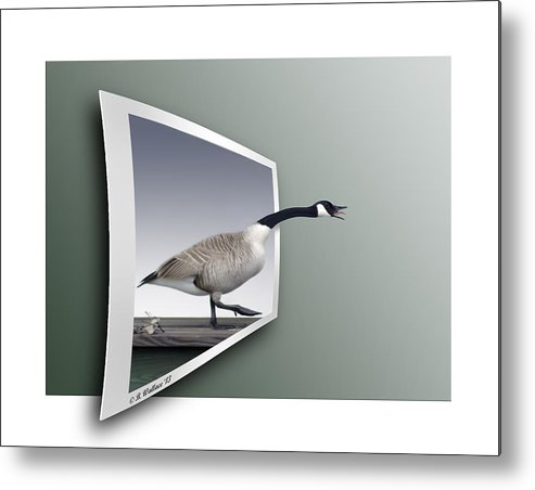 2d Metal Print featuring the photograph Take A Gander by Brian Wallace