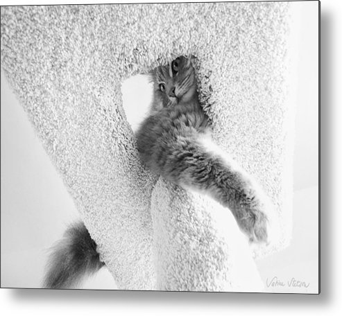Cat Metal Print featuring the photograph On Top by Sabine Stetson