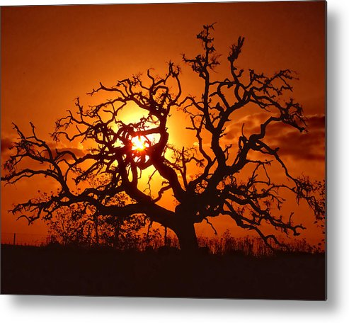 Spooky Metal Print featuring the photograph Spooky Tree by Stephen Anderson