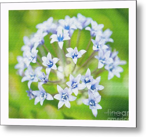 Agapantha Purple Flowers Metal Print featuring the photograph Agapantha Purple Flowers by Artist and Photographer Laura Wrede