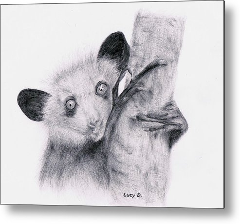 Wildlife Metal Print featuring the drawing Aye-aye by Lucy D