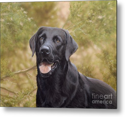 Black Labrador Metal Print featuring the painting Black Watch by John Silver