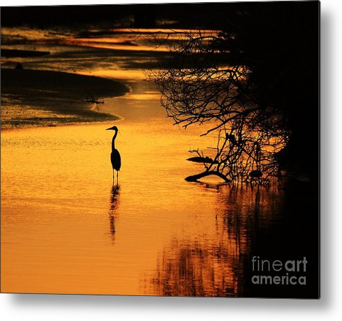 Heron Metal Print featuring the photograph Sublime Silhouette by Al Powell Photography USA