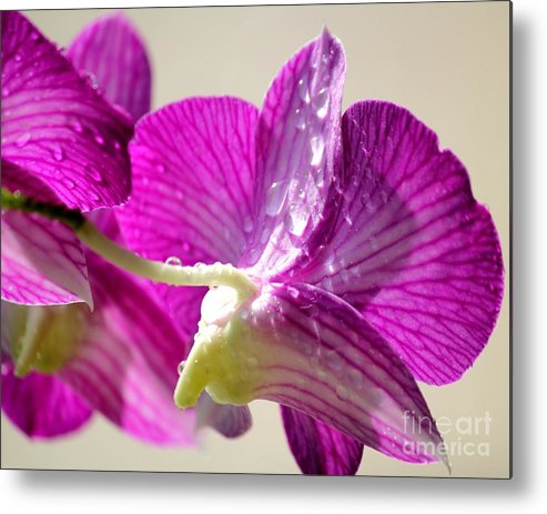 Orchids Metal Print featuring the photograph Orchids And Raindrops by Theresa Willingham