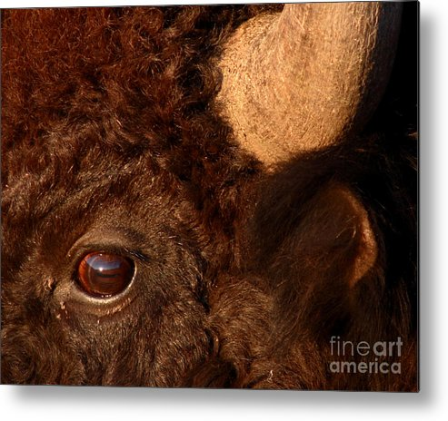 Sunset Reflections In The Eye Of A Buffalo Metal Print by Max Allen