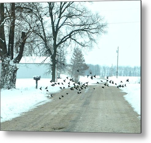 Indiana Winters Metal Print featuring the photograph Disturbing The Flock by Julie Dant