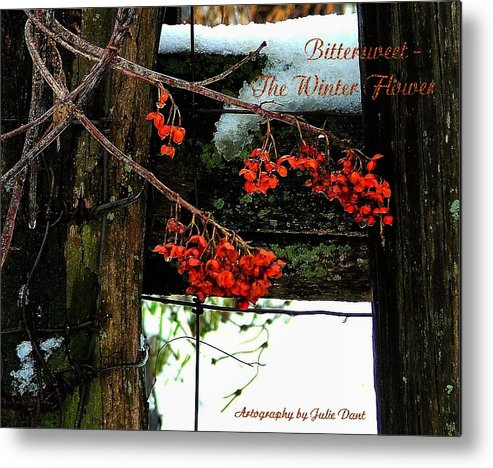 Bittersweet Metal Print featuring the photograph Bittersweet The Winter Flower by Julie Dant