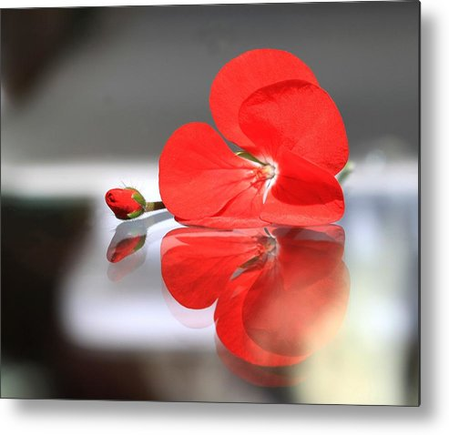 Geranium Metal Print featuring the photograph Geranium Reflections by Andrea Lazar