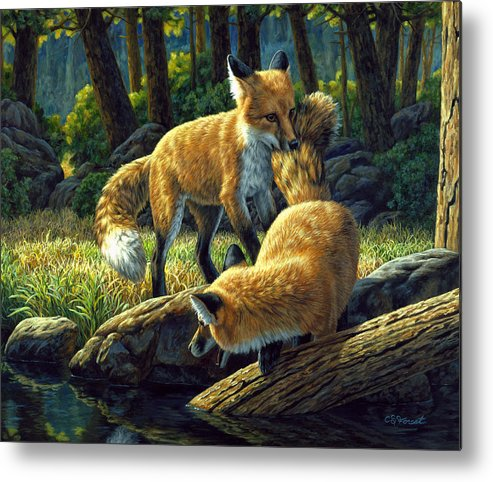 Fox Metal Print featuring the painting Red Foxes - Sibling Rivalry by Crista Forest